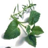 herbe1